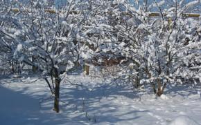 Picture winter, snow, trees, morning, Meduzanol ©