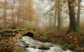 Picture autumn, forest, trees, river, the bridge, Spain, Navarre