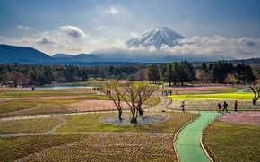 Picture Japan, mount Fuji, Fuji Shibazakura