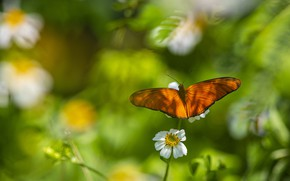 Picture greens, white, flower, summer, leaves, macro, light, background, butterfly, orange, blur, spring, insect, red, bokeh