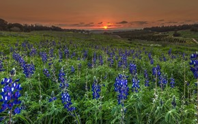 Picture field, summer, sunset, flowers