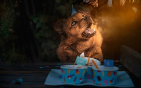 Wallpaper language, food, face, nature, lighting, background, red, birthday, holiday, table, brown, dog