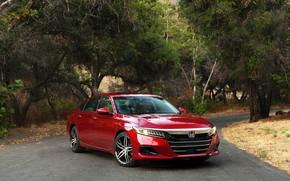 Picture trees, Honda, Accord, sedan, Hybrid, hybrid, Touring, four-door, 2020, 2021