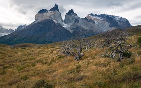 Picture Chile, Patagonia, Torres del Paine National Park