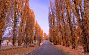 Picture road, autumn, trees