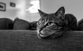 Picture cat, cat, look, face, grey, room, sofa, lies, black and white, striped, monochrome, bokeh