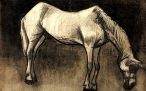 Picture Vincent van Gogh, white horse, Old Nag