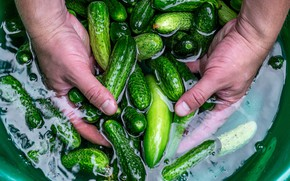 Picture Shine, hands, green, cook, vegetables, fresh, cucumbers, Taz, pickles, marinated, swim, salted, salting, brine, salt, …