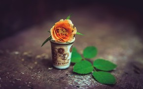 Picture flower, background, Cup