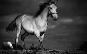 Picture night, horse, horse