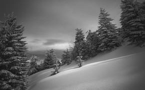 Picture winter, snow, nature