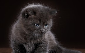 Picture kitty, grey, baby, grey, wallpapers, cats