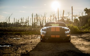 Picture the sun, Mustang, Ford, Shelby, front view, GT-S, 2019