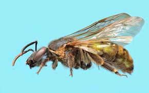 Picture bee, blue background, José Gabriel Martínez Fonseca