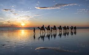 Picture sea, shore, camels, caravan