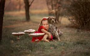 Picture mushroom, dog, girl