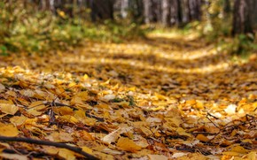Picture leaves, Autumn, track