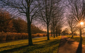 Picture road, autumn, the sun, light, trees, Park, branch, track, alley