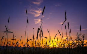 Picture the sky, grass, glow