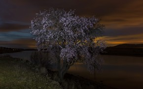 Picture night, river, tree