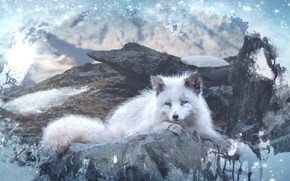 Picture Fox, animal, photoart