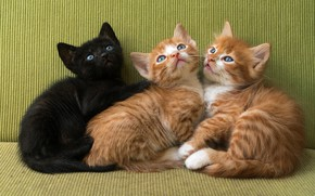 Picture cats, kitty, black, kittens, kitty, red, trio, three kittens, Trinity