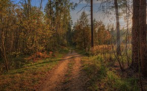 Picture Nature, Road, Forest