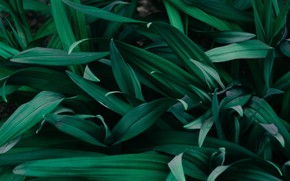 Picture green, minimalism, leaves