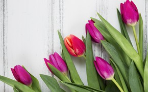 Picture flowers, colorful, tulips, wood, flowers, tulips, spring, purple