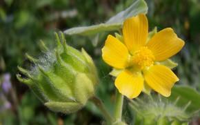 Picture Flower, Meduzanol ©, Meadow