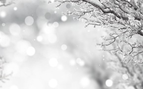 Picture winter, frost, snow, branches, black and white, winter, snow
