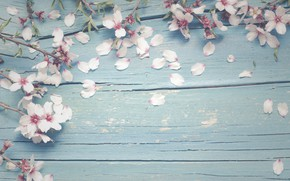 Picture flowers, branches, apple, spring, Apple, flowering, wood, blossom, flowers, spring