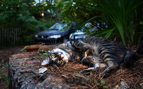 Picture machine, auto, cat, cat, look, face, light, pose, street, foliage, yard, lies, though