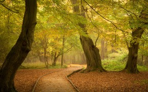 Picture autumn, forest, trees, Park, England, track, path