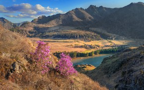 Picture landscape, mountains, nature, river, spring, Katun, Altay, Vladimir Ryabkov, Sensing, маральник