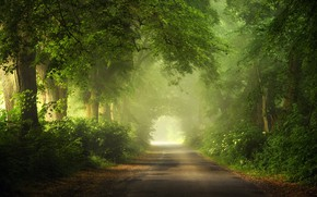 Picture summer, road, trees, light effects