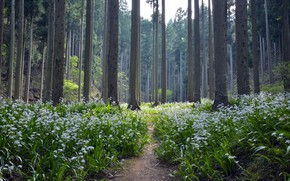 Picture forest, summer, flowers