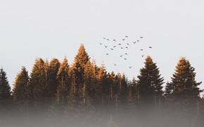 Wallpaper forest, birds, fog