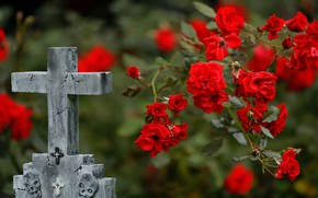 Picture flowers, roses, cross, red, headstone, rose Bush