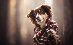 Picture background, each, dog