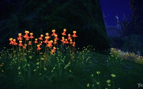 Picture flowers, night, the game, meadow, Tera