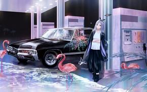Picture machine, girl, Flamingo