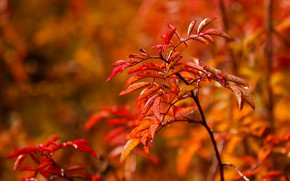Picture autumn, leaves, nature, foliage, branch, red, orange, the bushes, bokeh, autumn leaves