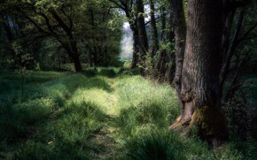 Picture forest, summer, nature