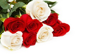 Picture roses, red, white