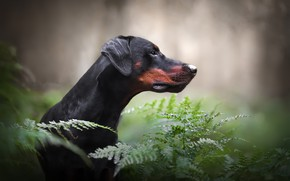 Picture each, dog, ferns