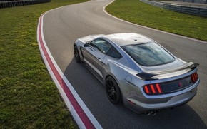 Picture grey, lawn, Mustang, Ford, Shelby, GT350R, 2020