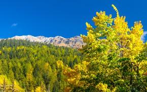 Picture autumn, mountains, Italy, Valle d'aosta, Курмайор