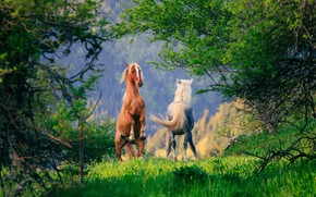 Wallpaper trees, horse, horse, pair