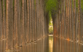 Picture water, trees, reflection, trees, water, alley, reflection, alley